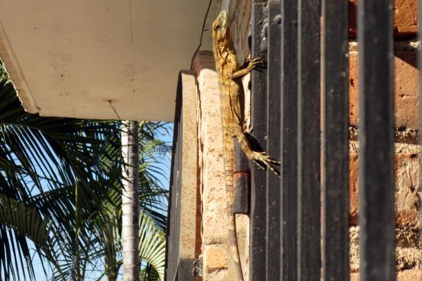 lizardoh