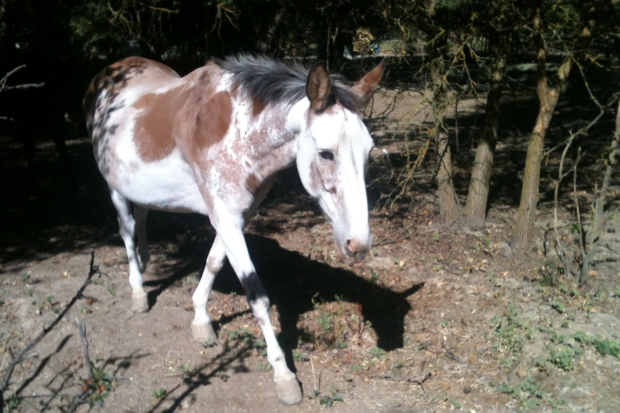 burro-whiskey