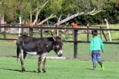 Little burro next to Santa Cruz