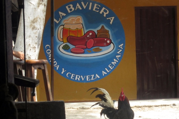 baveria-gallo