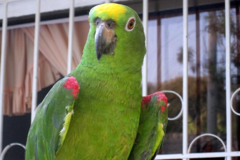 cute-bird4