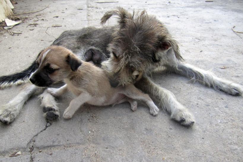 mama-pup