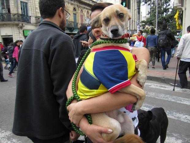 colombia-perro