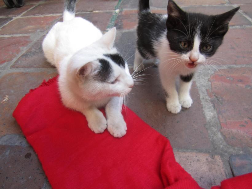 hostal-cats
