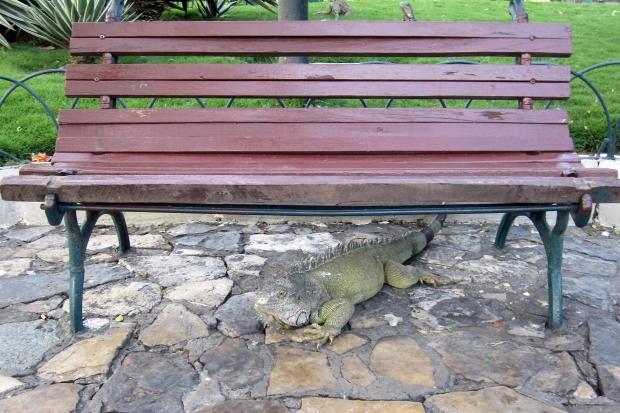 iguanabench