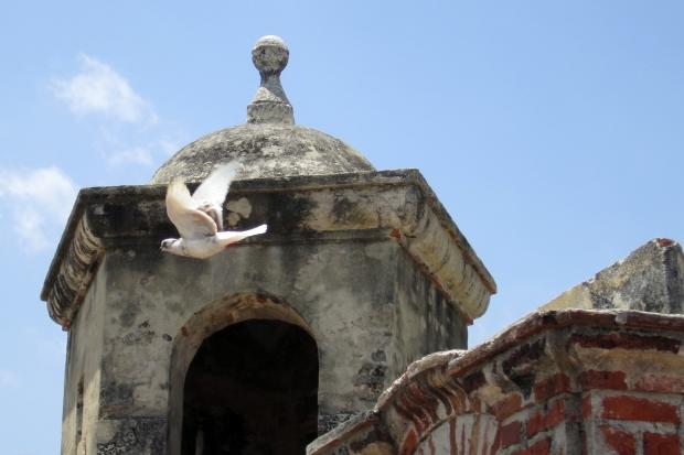 castill-paloma