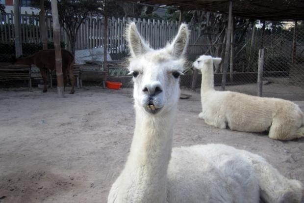 huaca-llama
