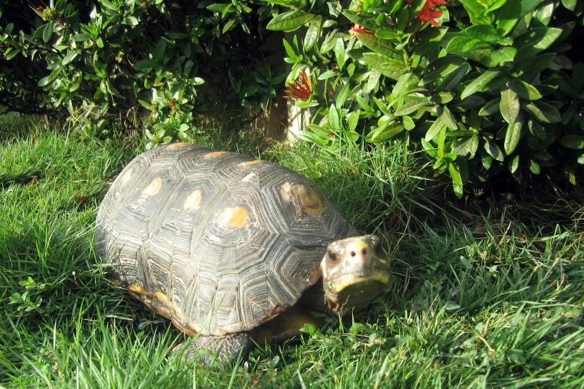romeo-tortuga