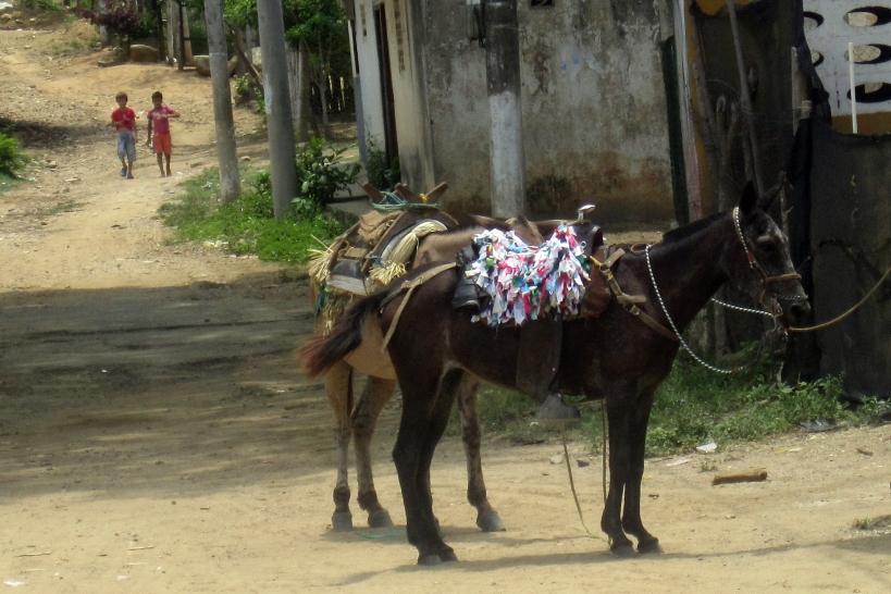 palo-caballo