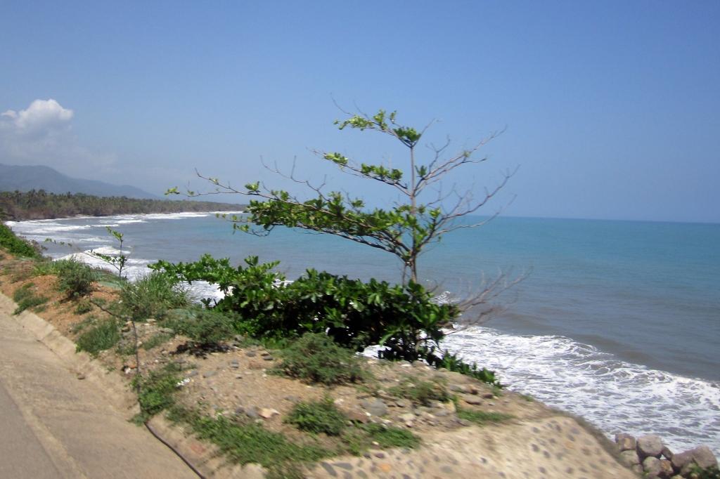 palo-coasta