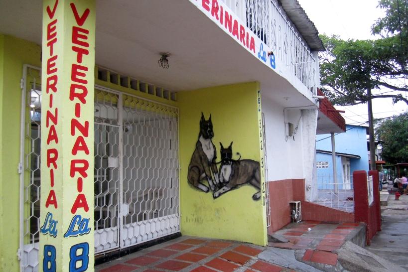 veterinaria-8