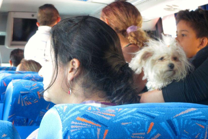 bus-dog2