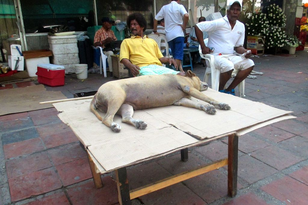 dog-table