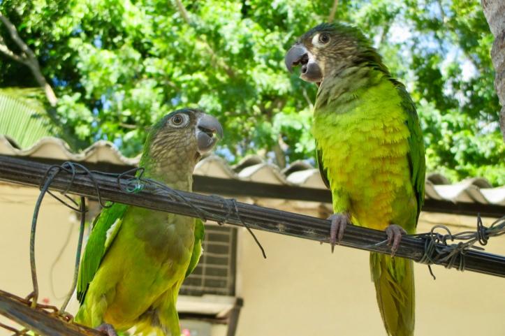 Tolu Birds
