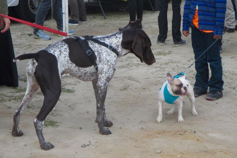 food-fest-dogs